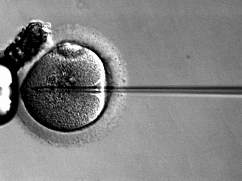 Endometriosis, Fertilidad y Esterilidad. Óvulo fertilizado