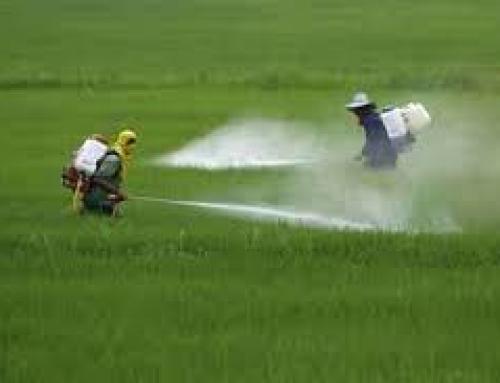 Dos pesticidas pueden aumentar el riesgo de padecer Endometriosis