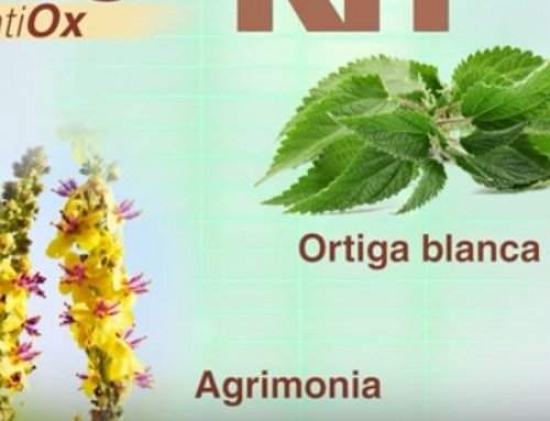 Endometriosis, dieta y antioxidantes